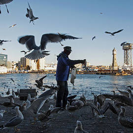 Seagulls At Barcelona Harbor by Dubi Roman