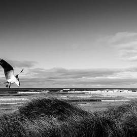Seagulls dancing on the wind by Shivonne Ross