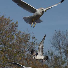 Seagulls by Ernie Echols