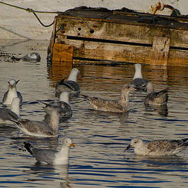Seagulls gather for breakfast by Dave Byrne