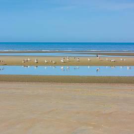 Pati Photography - Seagulls On Shore