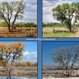 Seasons of the Cottonwood by Bob Hislop