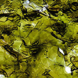 Seaweed 2 by Dragan Kudjerski