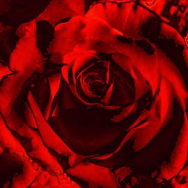 Maggie Vlazny - Seductive Red Rose