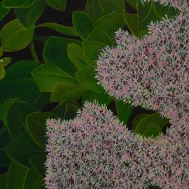 Tammy Powell - Sedum - Pretty in Pink