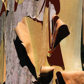 Sensitive Skin - Madrone Tree Art - Nature Fine Art Prints by Brooks Garten Hauschild
