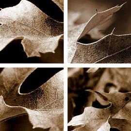 Sepia Leaf Collage by Lauren Radke