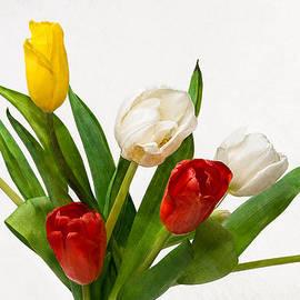 Alexander Senin - Seven Tulips - Four Colors