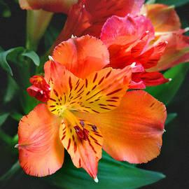 Bill Voizin  - Shades of Orange