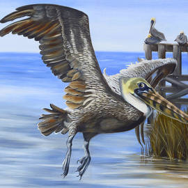 Phyllis Beiser - Shadowy Pelican In Flight