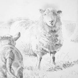 Sheep And Lamb Drawing by Mike Jory
