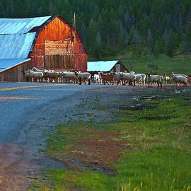 Theresa Tahara - Sheep Crossing