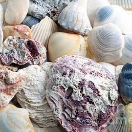 Shells From The Sea by Andee Design