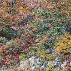 Shenandoah Colors by Lee Kirchhevel