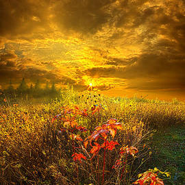 Phil Koch - Shine Your Light for the World to See