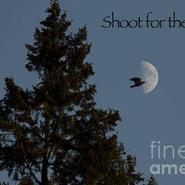 Shoot For The Moon by Belinda Greb