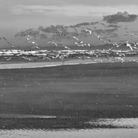 Shore Sea and Gulls by Allan Van Gasbeck