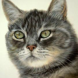 Katja Sauer - Sibirian cat Olga