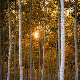 Dan Mihai - Signs of Autumn