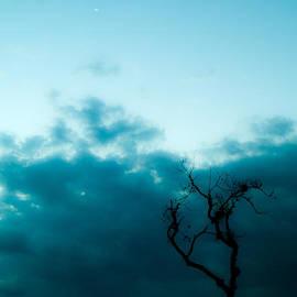 Silhou by Tyler Lucas