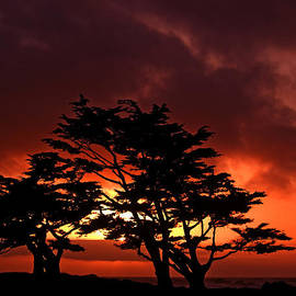 Silhouetted Cypresses by Bill Gallagher