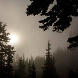 Silhouettes Of Trees On Mt Rainier by Greg Reed