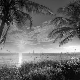 Silver Morning by Debra and Dave Vanderlaan