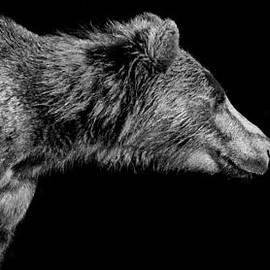 Stuart Partridge - Simply - The Bear
