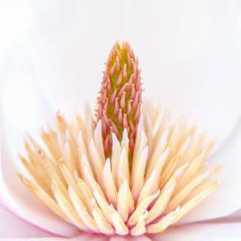 Simply Magnolia by Sarah-fiona  Helme