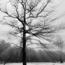 Single leafless tree in winter forest by Iryna Liveoak