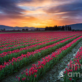 Inge Johnsson - Skagit Valley Predawn