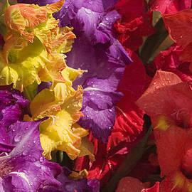 Sunil Kapadia - SKC 4707 Riot of Floral Color
