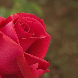 Sunil Kapadia - SKC 4944 Presentable for Love