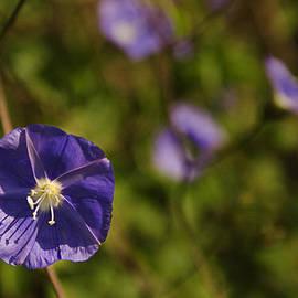 Sunil Kapadia - SKC 9880 The Purple Glory