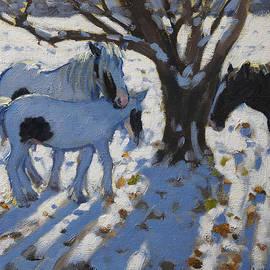 Andrew Macara - Skewbald Ponies in Winter