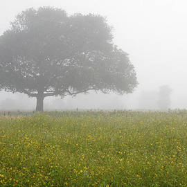 SKC 0056 Tree in Fog by Sunil Kapadia