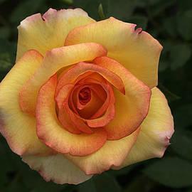 Sunil Kapadia - SKC 0443 Yellow-Red Coiled