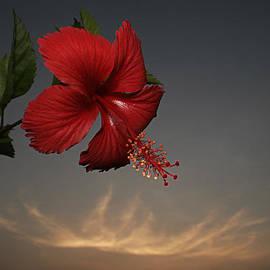 Sunil Kapadia - SKC 0455 Hibiscus And Cloud