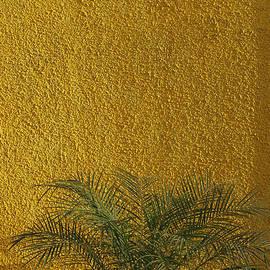 Sunil Kapadia - SKC 1243 Colour and Texture