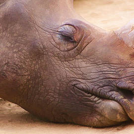 Sleepy Rhino by Photographic Art by Russel Ray Photos