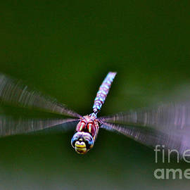 Smiley Face Dragonfly Coming at You by Janice Pariza