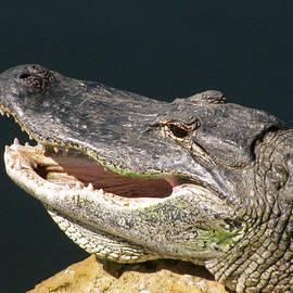 Melinda Saminski - Smiling Alligator