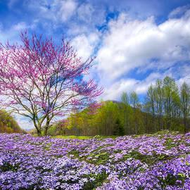 Smoky Mountain Spring by Debra and Dave Vanderlaan