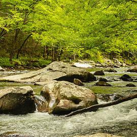 Robert Hebert - Smoky Mountain Stream