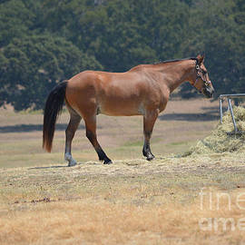 Horse Snack Time by Ruth  Housley