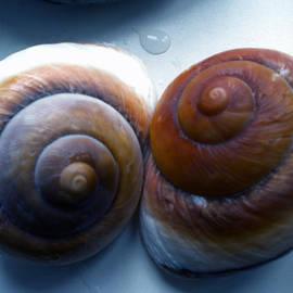 Colette V Hera  Guggenheim  - Snail Joy