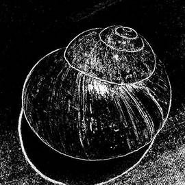 Snail Shell Black And White Art No.12 by Drinka Mercep