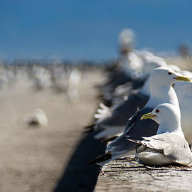 Snazzy Sea Gulls by Debra  Miller