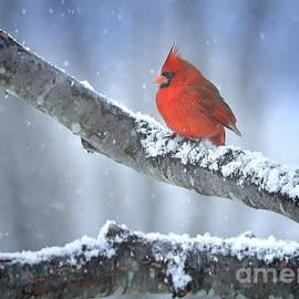 Nava Thompson - Snow Bird