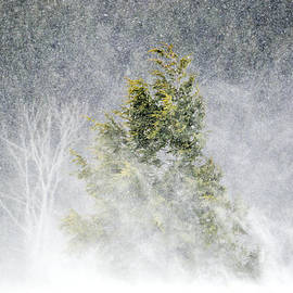 Emily Stauring - Snow Blown